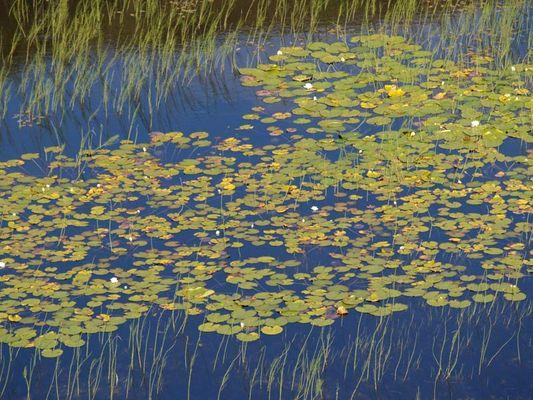 ...angelehnt an ein Bild von Monet
