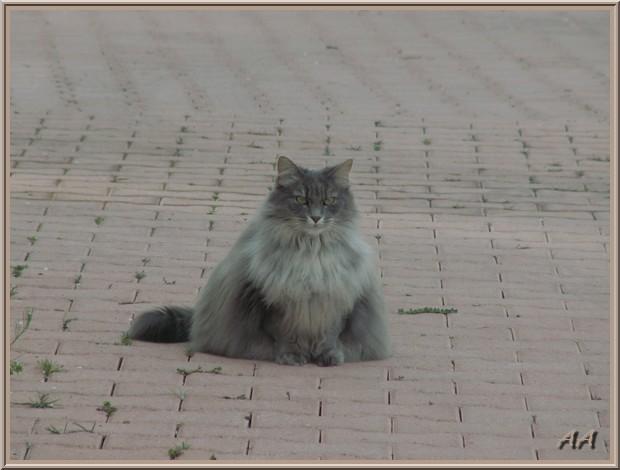 Angle de chat