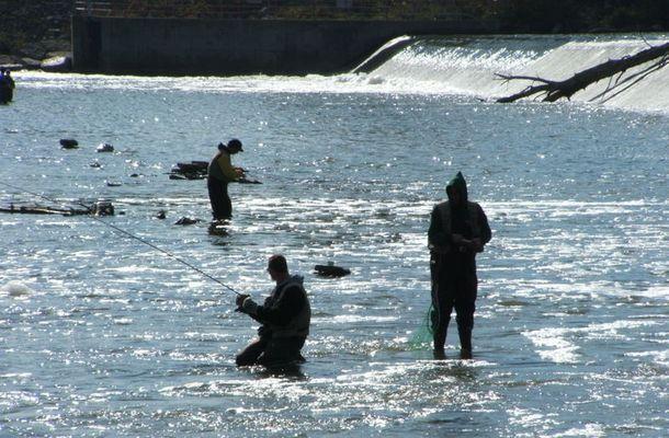Angler im Grand River