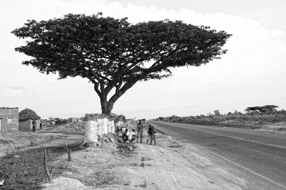 ANGOLA RENACE: Bajo el árbol