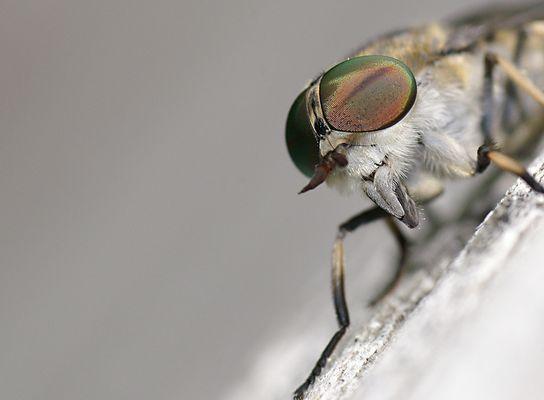 Angriff der Killerinsekten