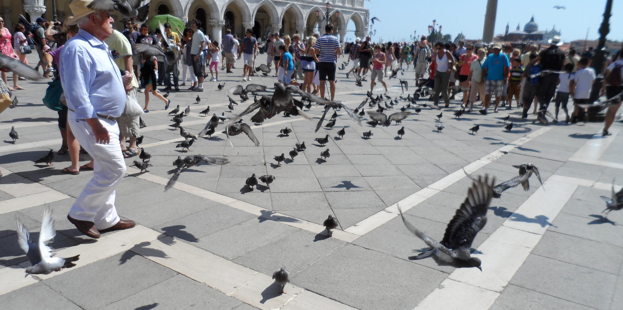 Angriff der Tauben