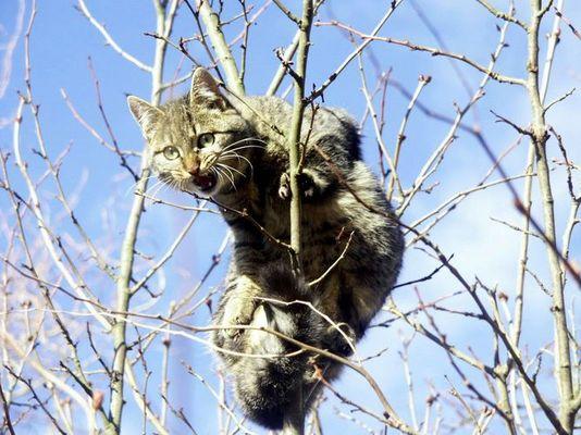 Angst-Katze