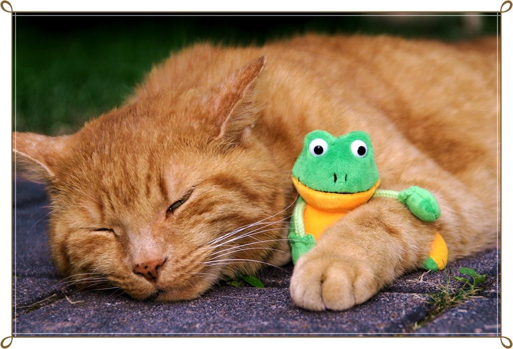 Animal - friendship - Mogli und Froggy