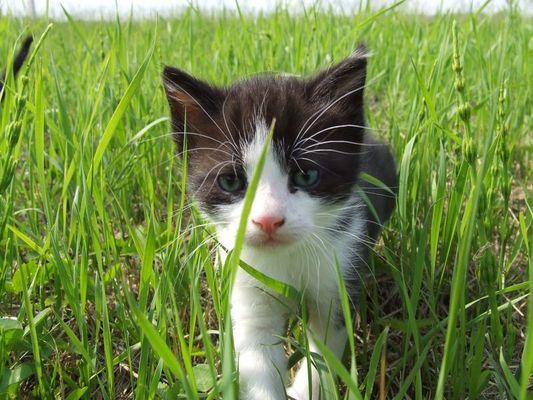Animal instinct - The Cranberries
