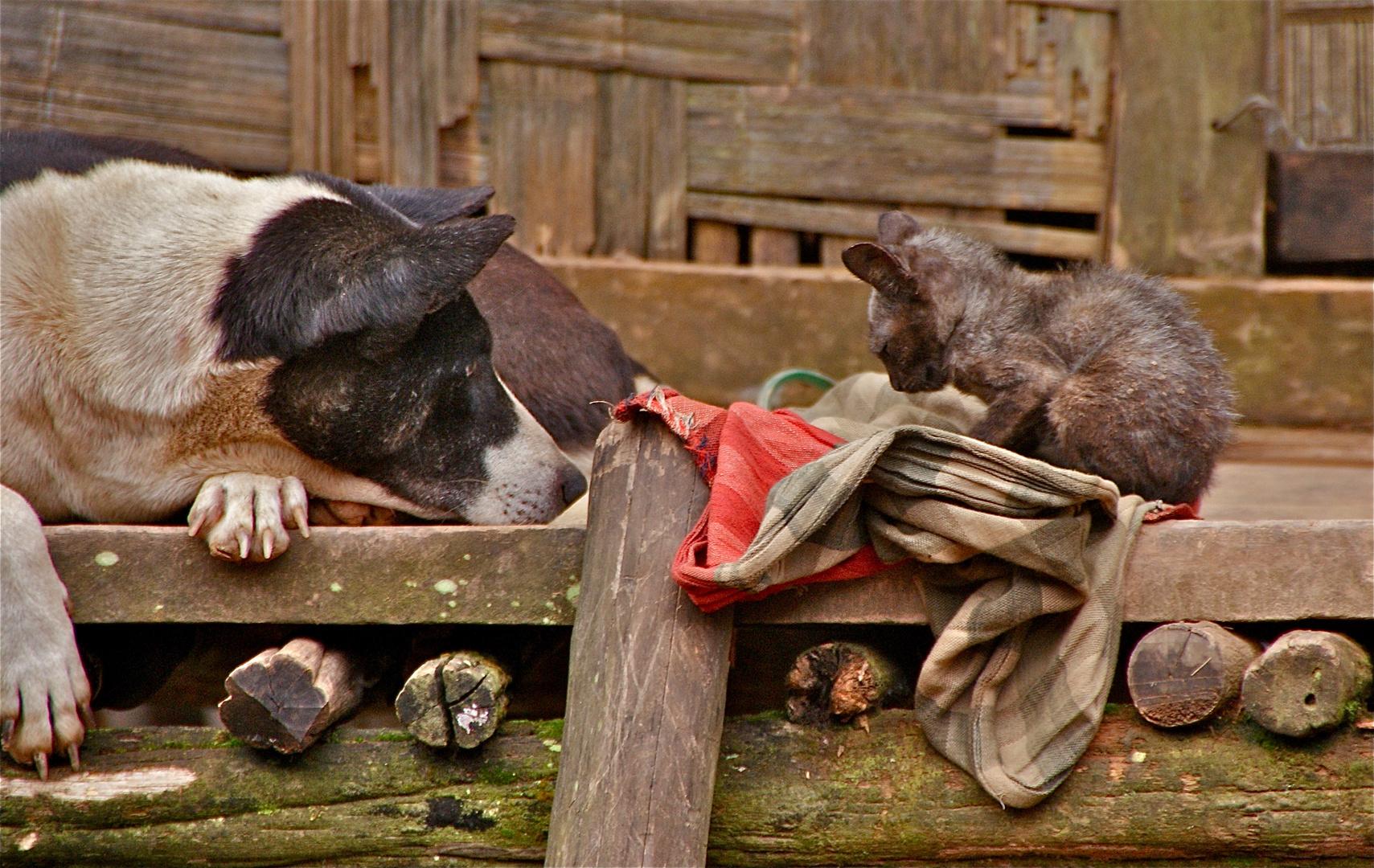 animal patchwork II