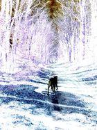 animal solitaire dans la forêt des rêves ...