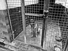 Animal Traffic - wir töten was wir lieben (Dieter Kaiser)