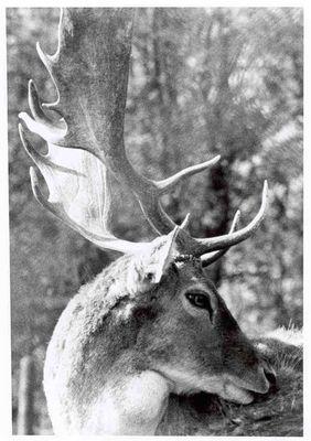 animalisches Porträt