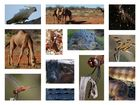 Animals in the Australian Outback