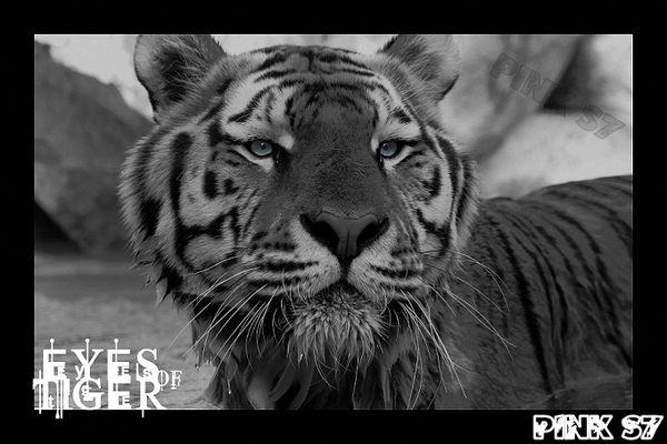animaux sauvage