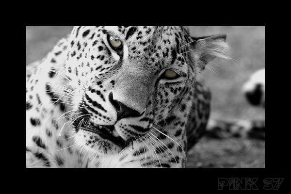 animaux sauvage1