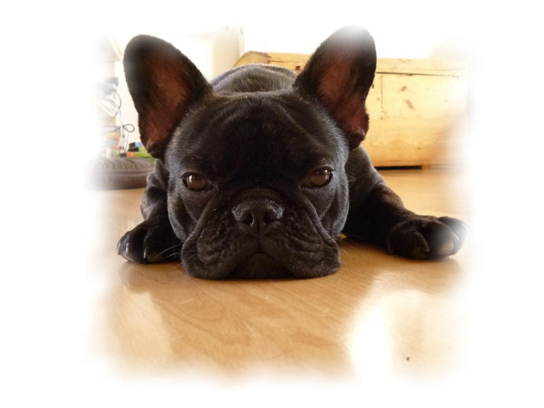 Anjas Hund