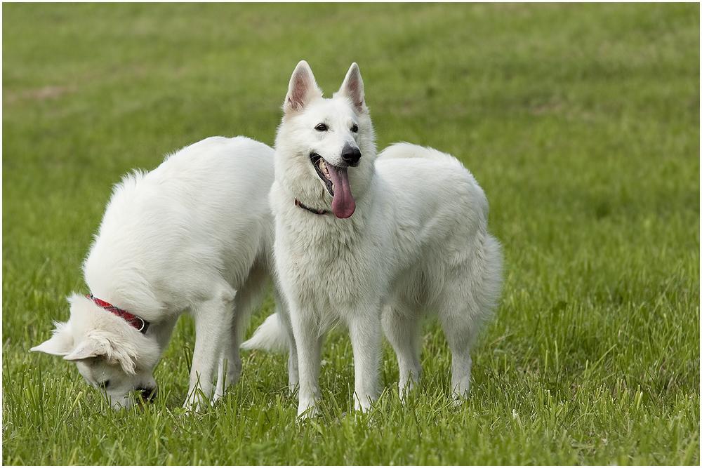 Anka und Hera