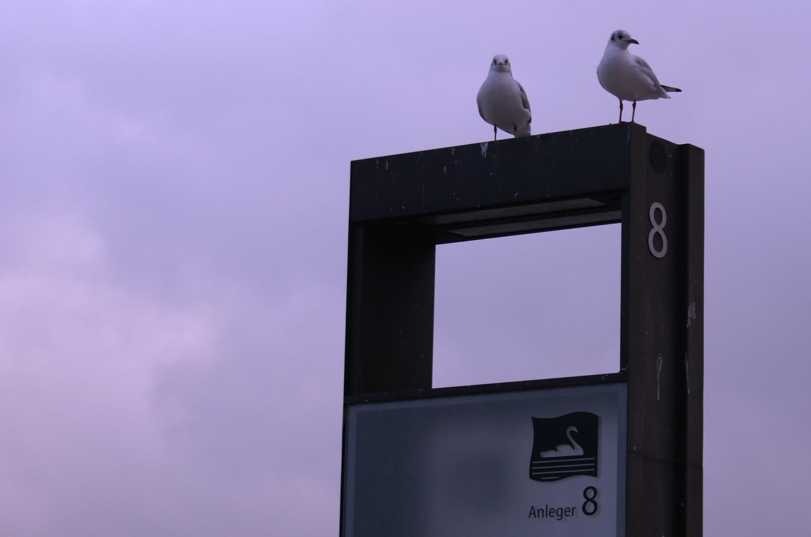 Anleger 8 - Hamburg