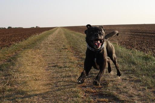 Annabell der fliegende hund