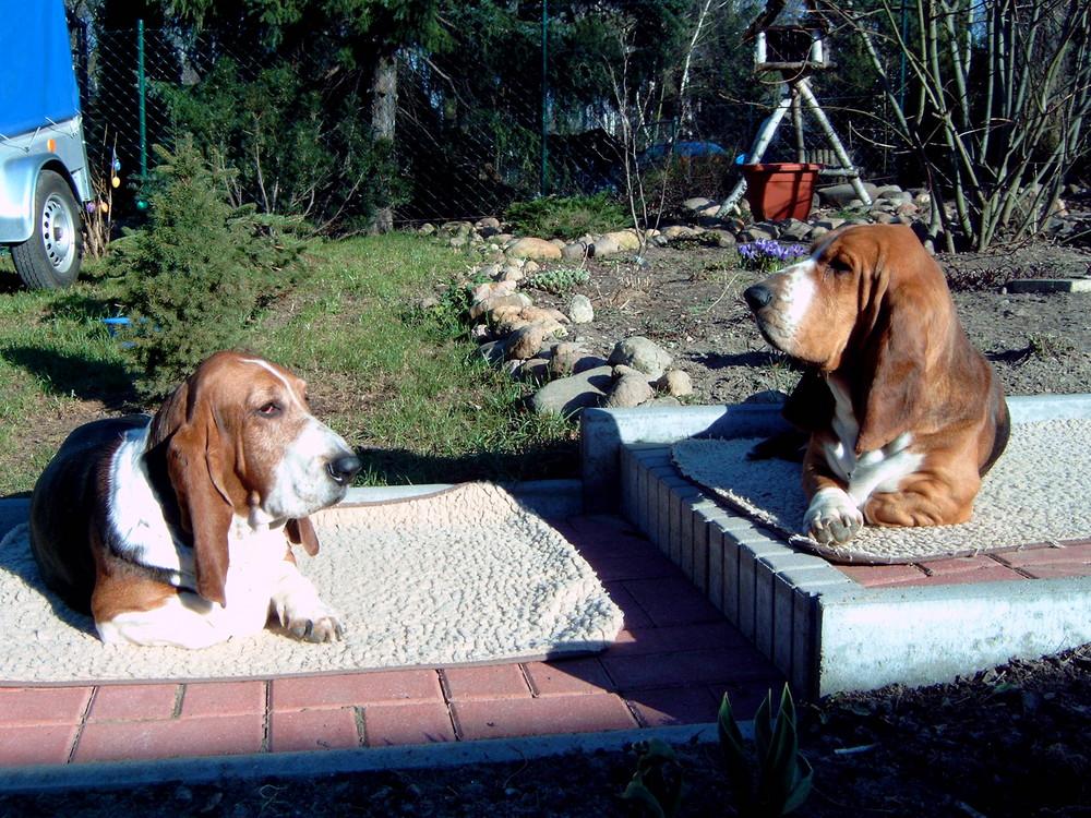 annabell (l) und paris(r) beim sonnenbaden