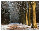 Annabos (near Breda, NL), Winter 2004