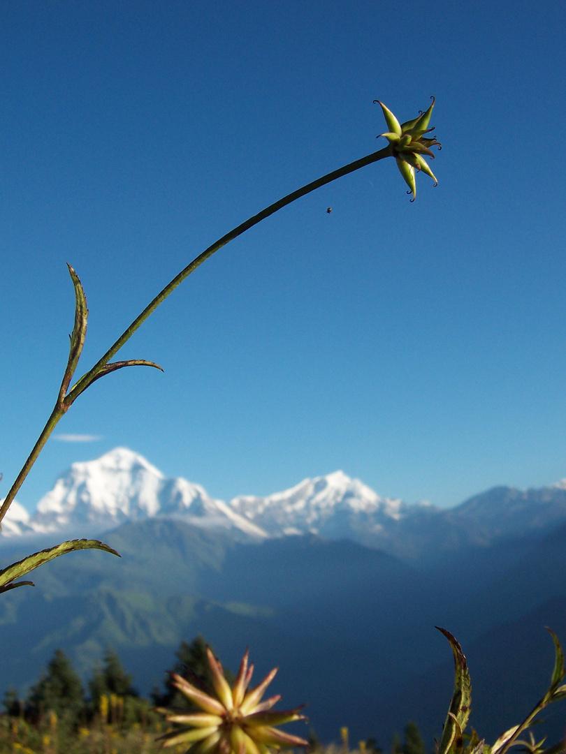 Annapurna I, 8091m