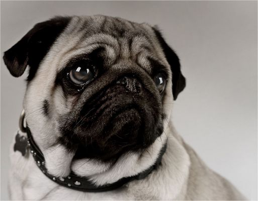 Another PuG