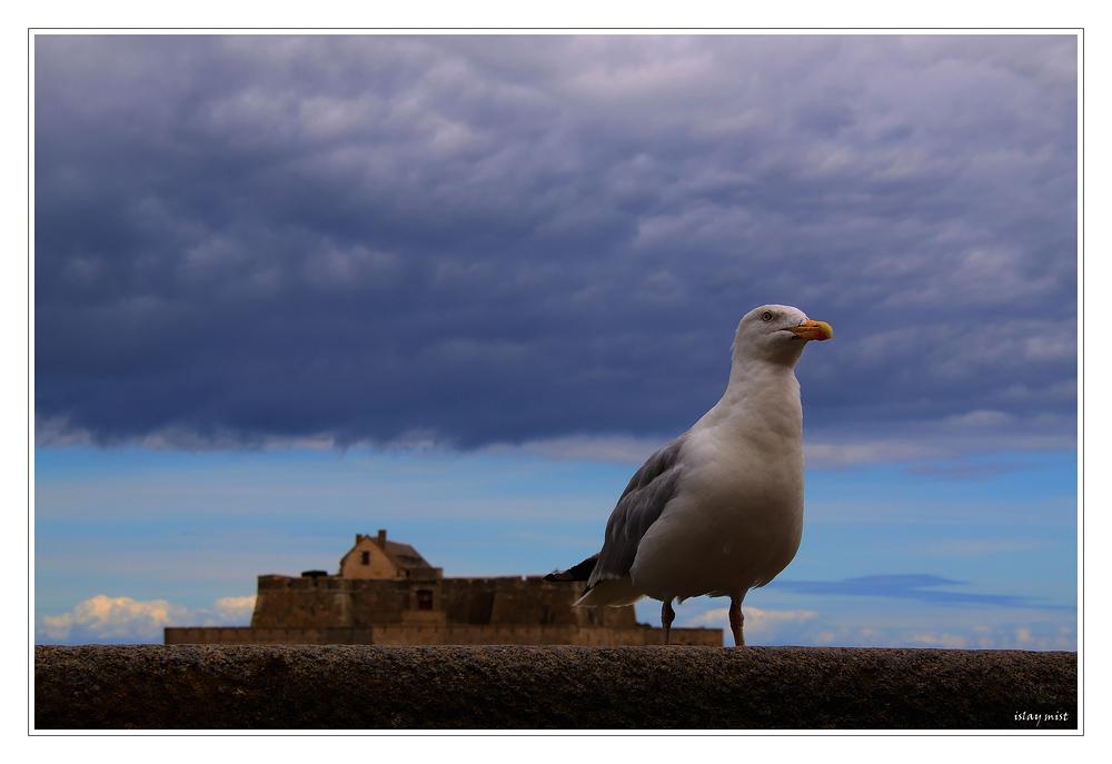 Another White Bird..........