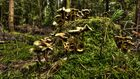 Ansammlung im Wald