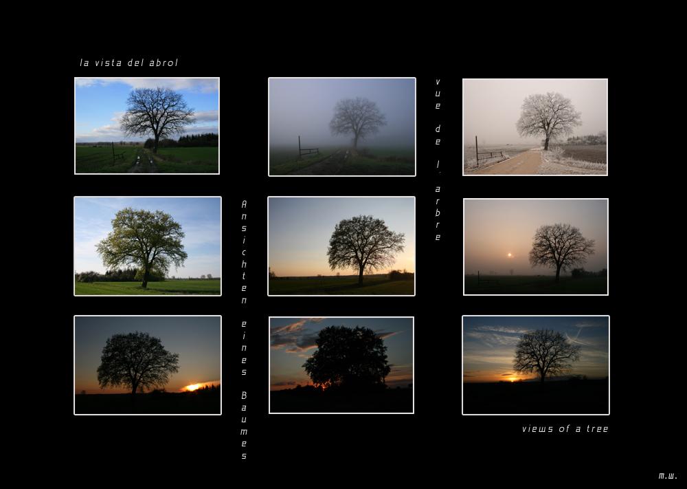 Ansichten eines Baumes