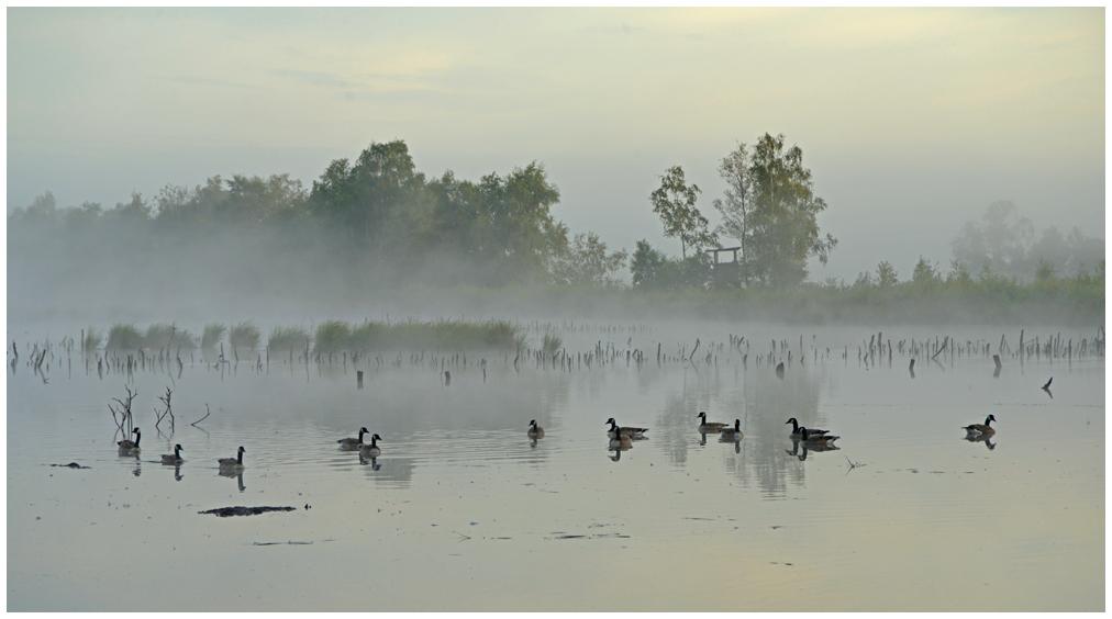 Ansitz im Nebel II ....