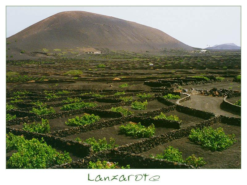     Anstrengender Weinanbau ohne Zukunft     La Geria     #1