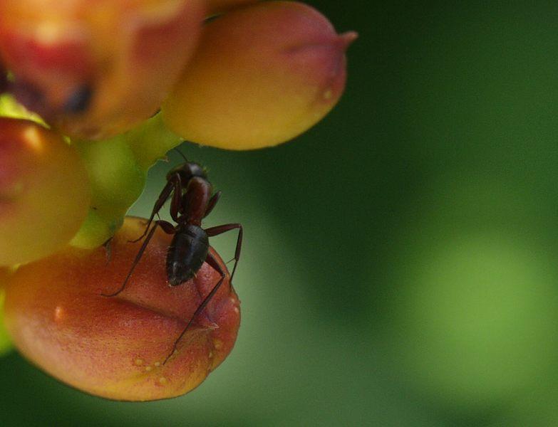 Ant-Back