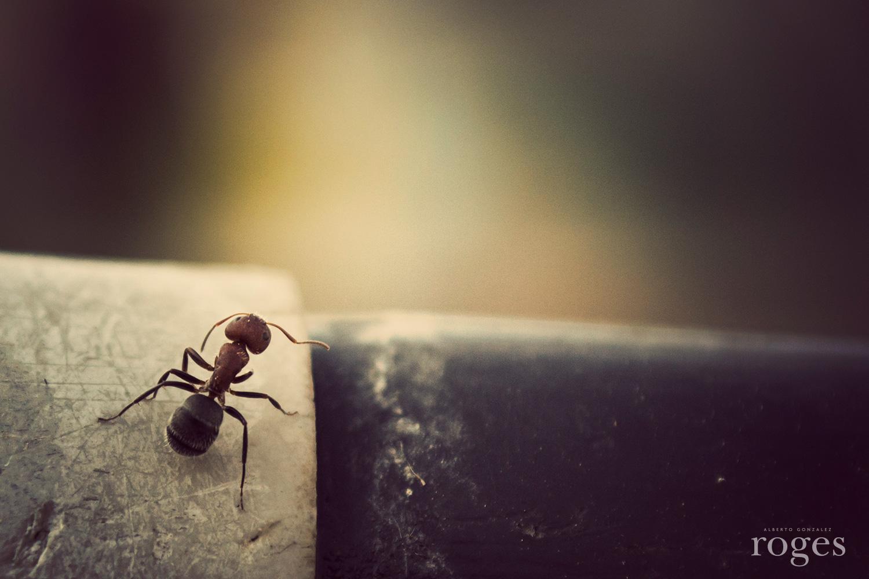 Ant--