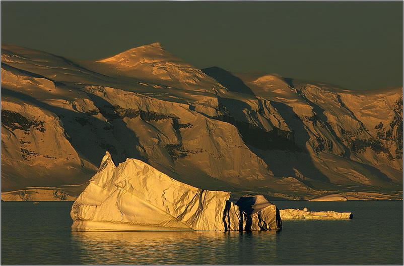 antarctic gold