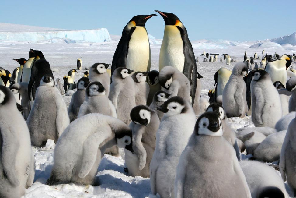 Antarctique, Garderie d'enfants d'un jour ordinaire de semaine.