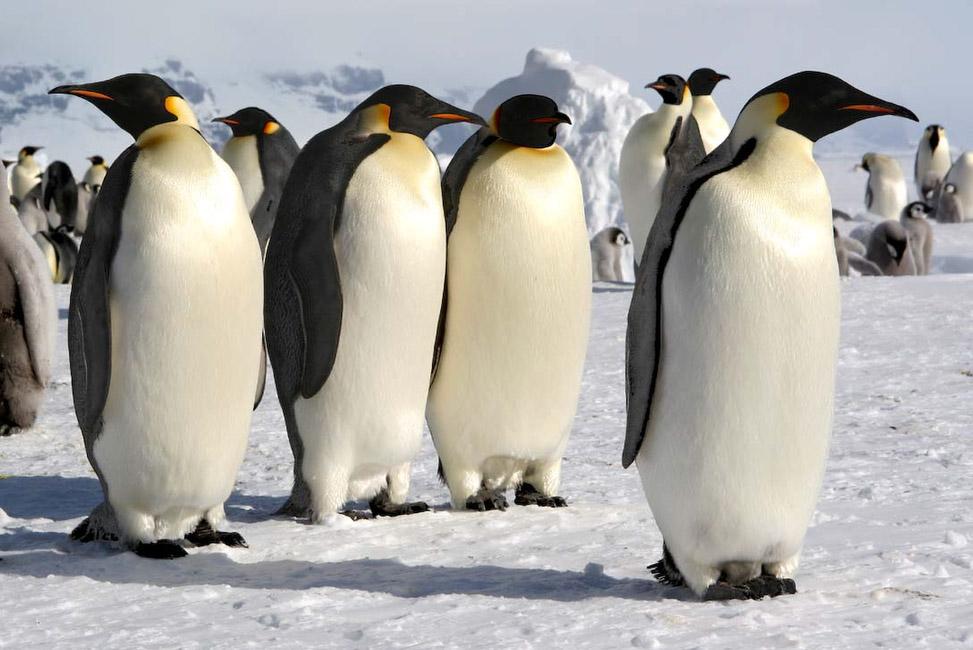 Antarctique, Ile de Coulmann