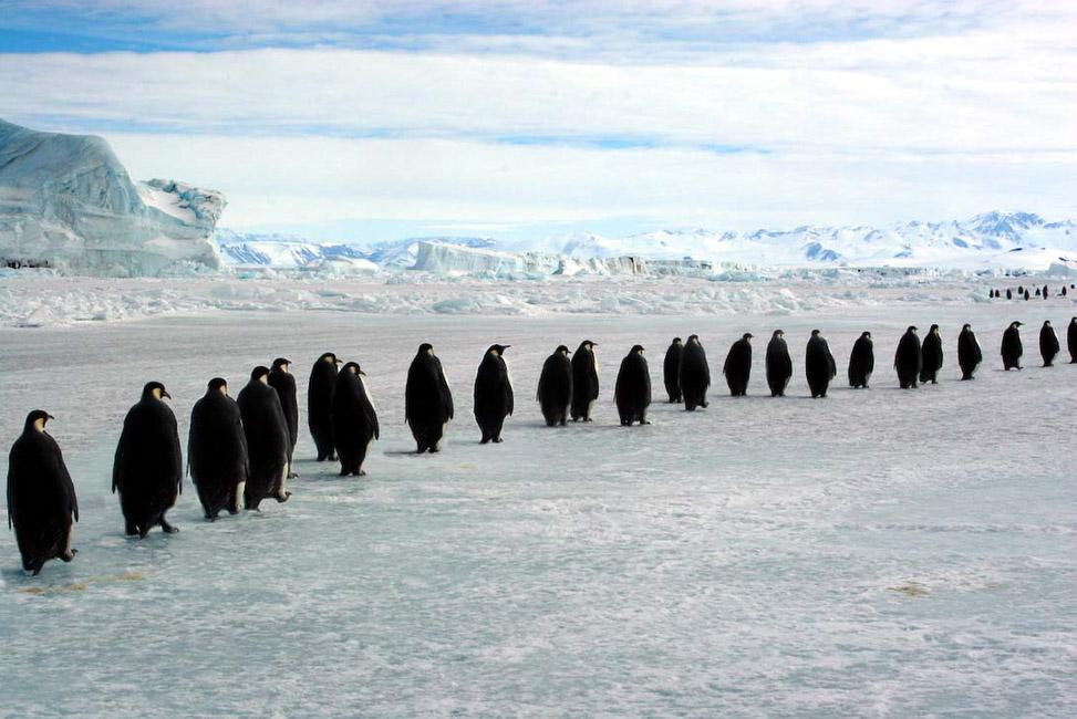 Antarctique, Marche des empereurs