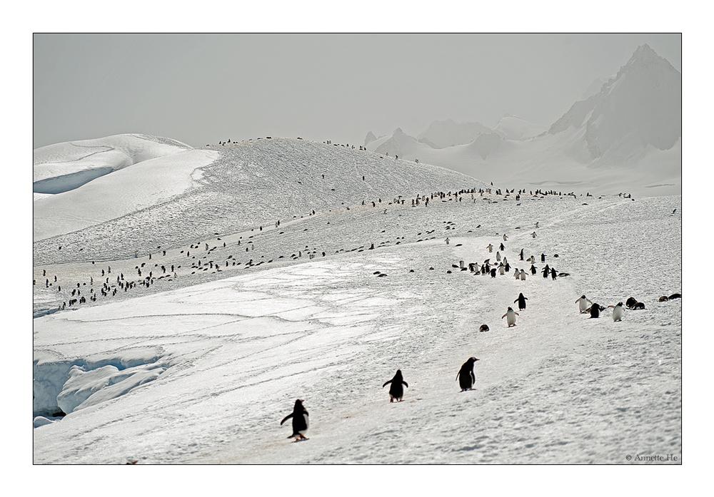 Antarktika [11]