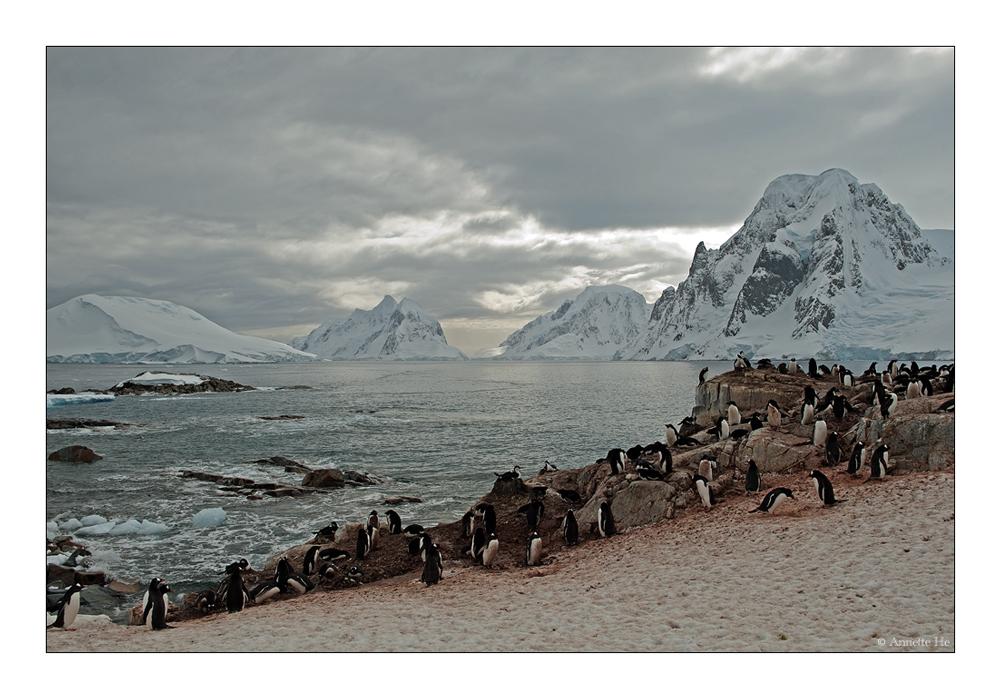 Antarktika [110] - Peterman Island