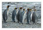 Antarktika [141] - Wohin des Weges