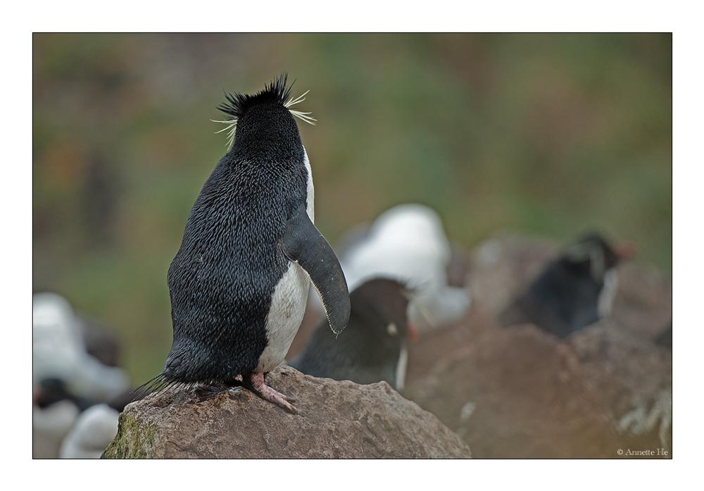 Antarktika [149] - Auch ein schöner Rücken ...