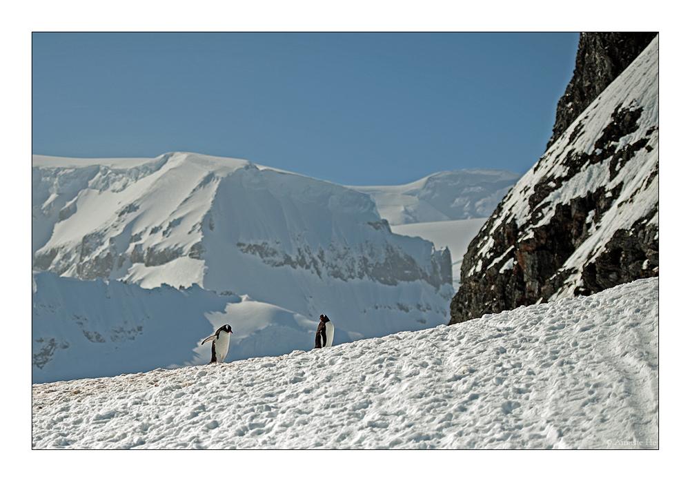 Antarktika [36] - Curville Island