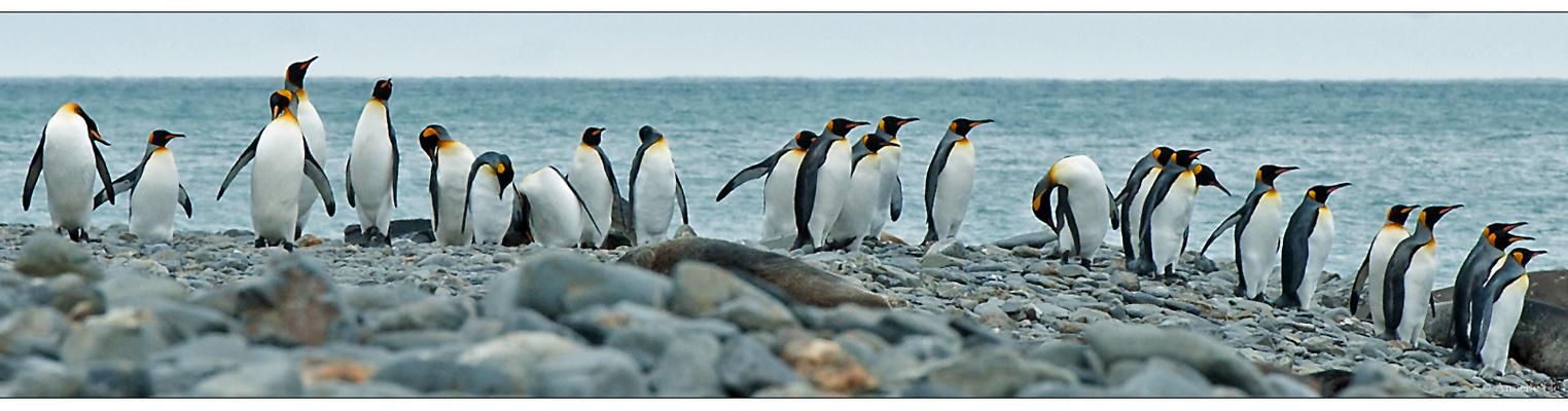 Antarktika [6] - Kingpingstrip