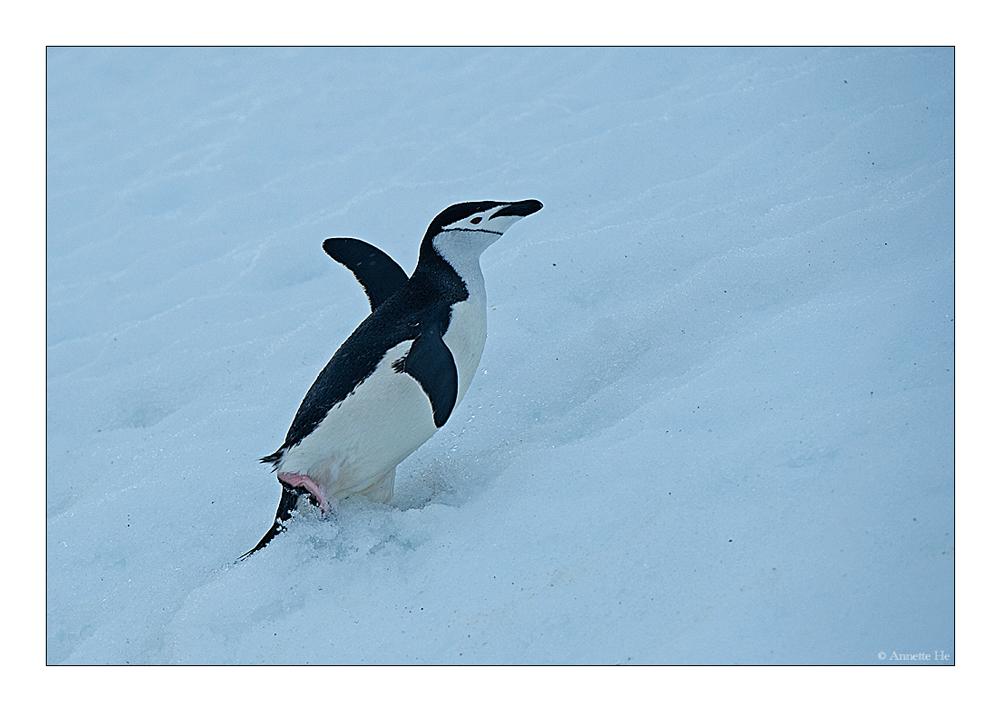 Antarktika [91] - Little Dancer