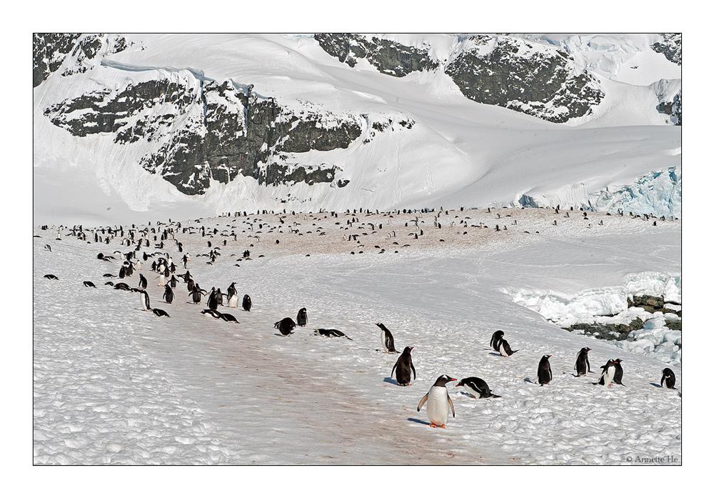 Antarktika [92] - Erhöhtes Verkehrsaufkommen