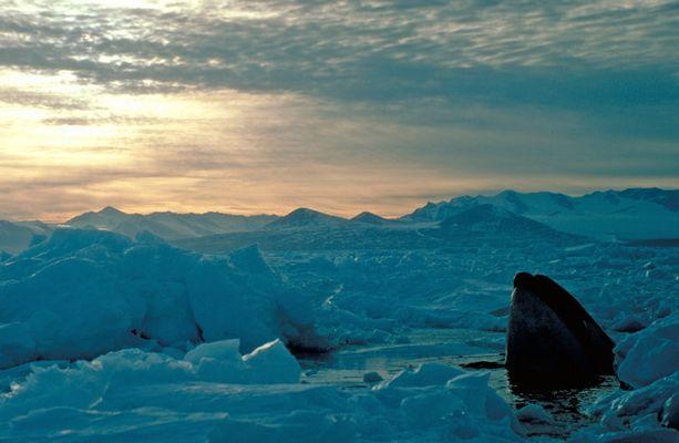 Antarktis - Eine Reise ins Eis