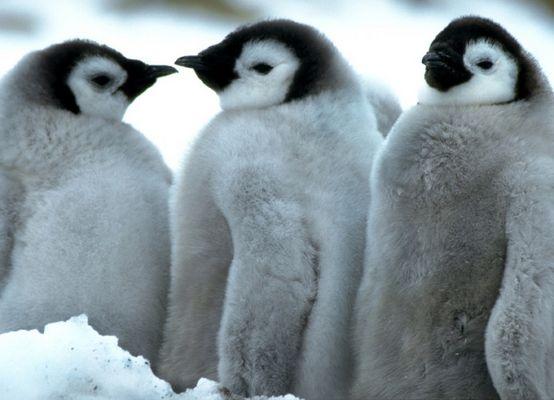 Antarktis - Eine Reise ins ewige Eis