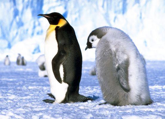 Antarktis- Eine Reise ins ewige Eis