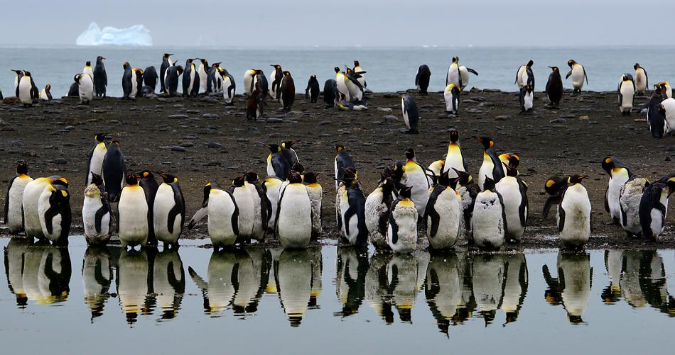 Antarktis Foto- Expeditionsreise 2013 Impression 13