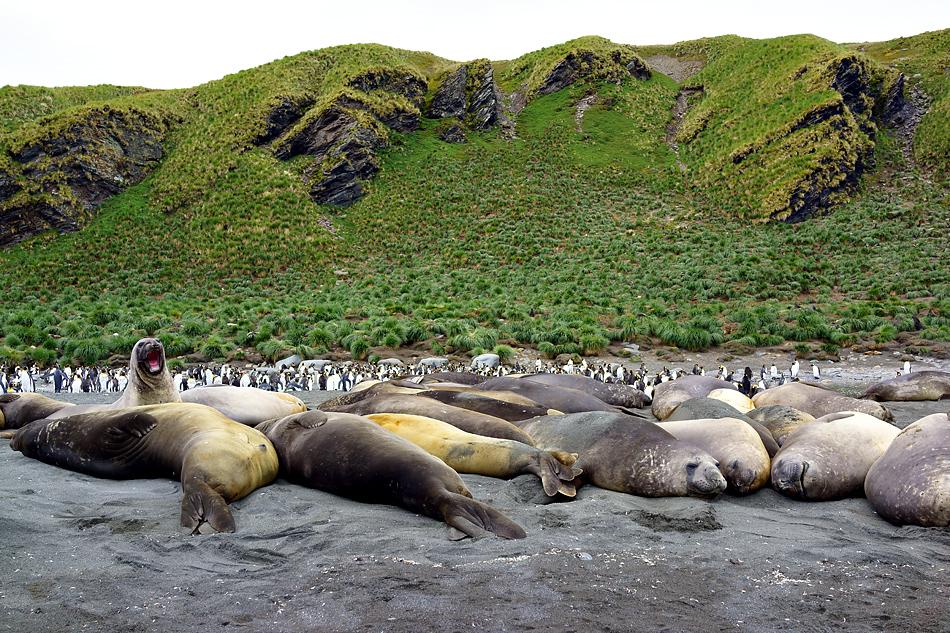 Antarktis Foto- Expeditionsreise 2013 Impression 6