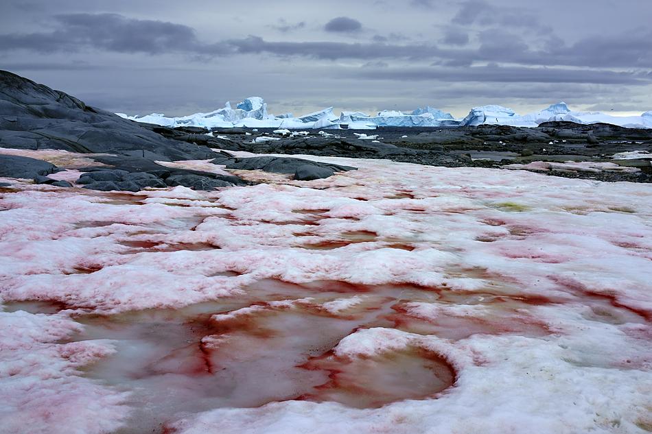 Antarktis Foto- Expeditionsreise 2013 Impression 8
