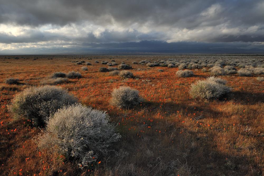 *Antelope Valley & upcoming storm II*